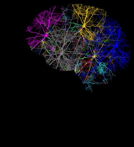 cranium-3244118_1280